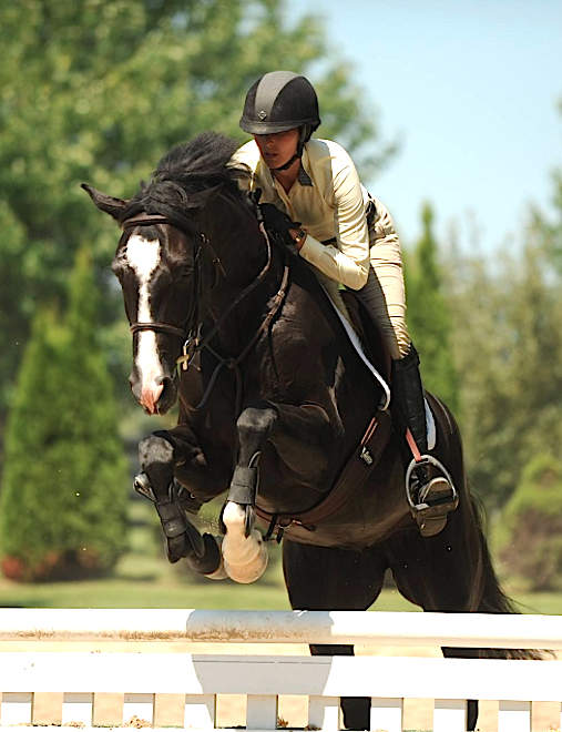 Black Warmblood Mare