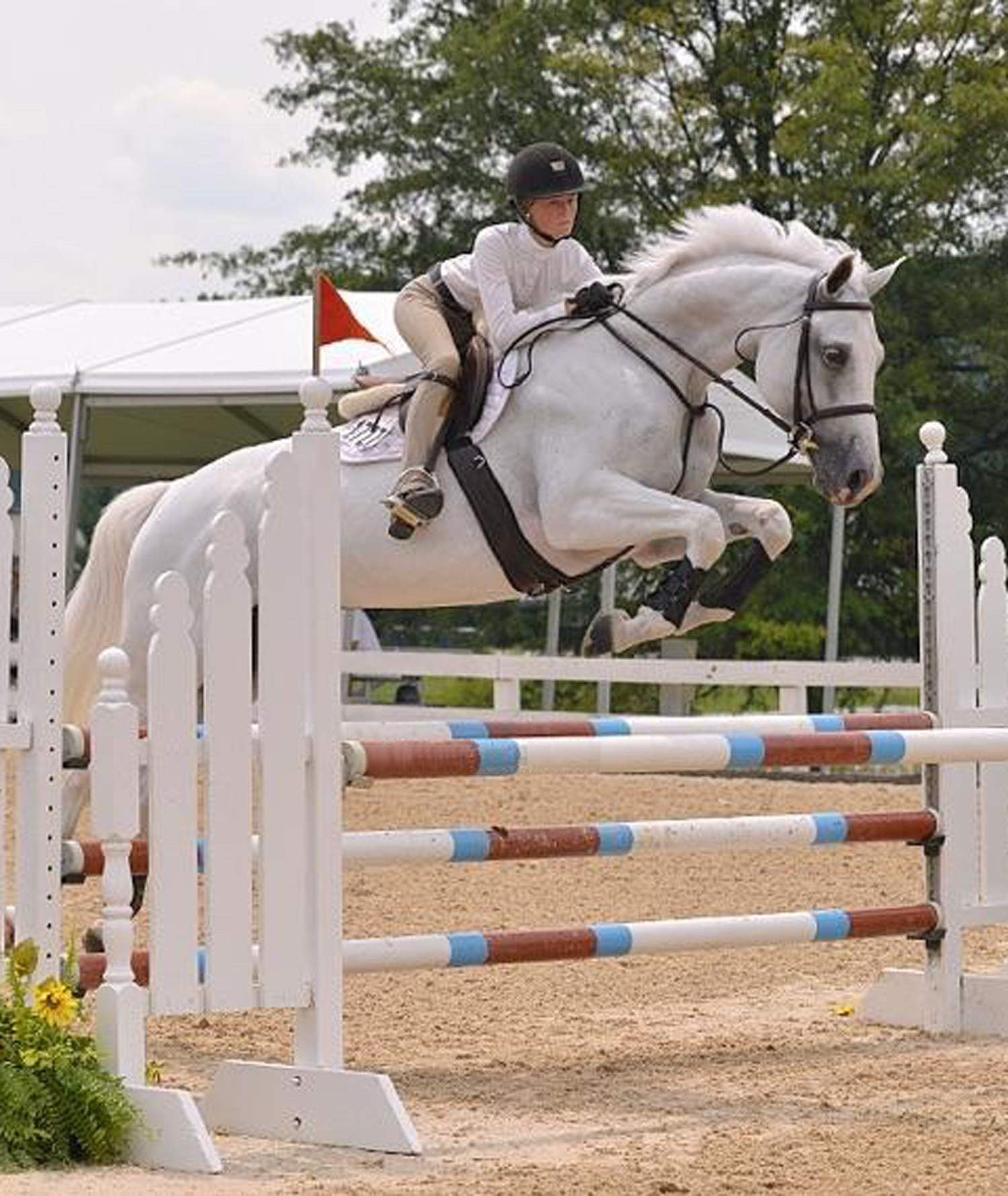 Grey Warmblood Horse
