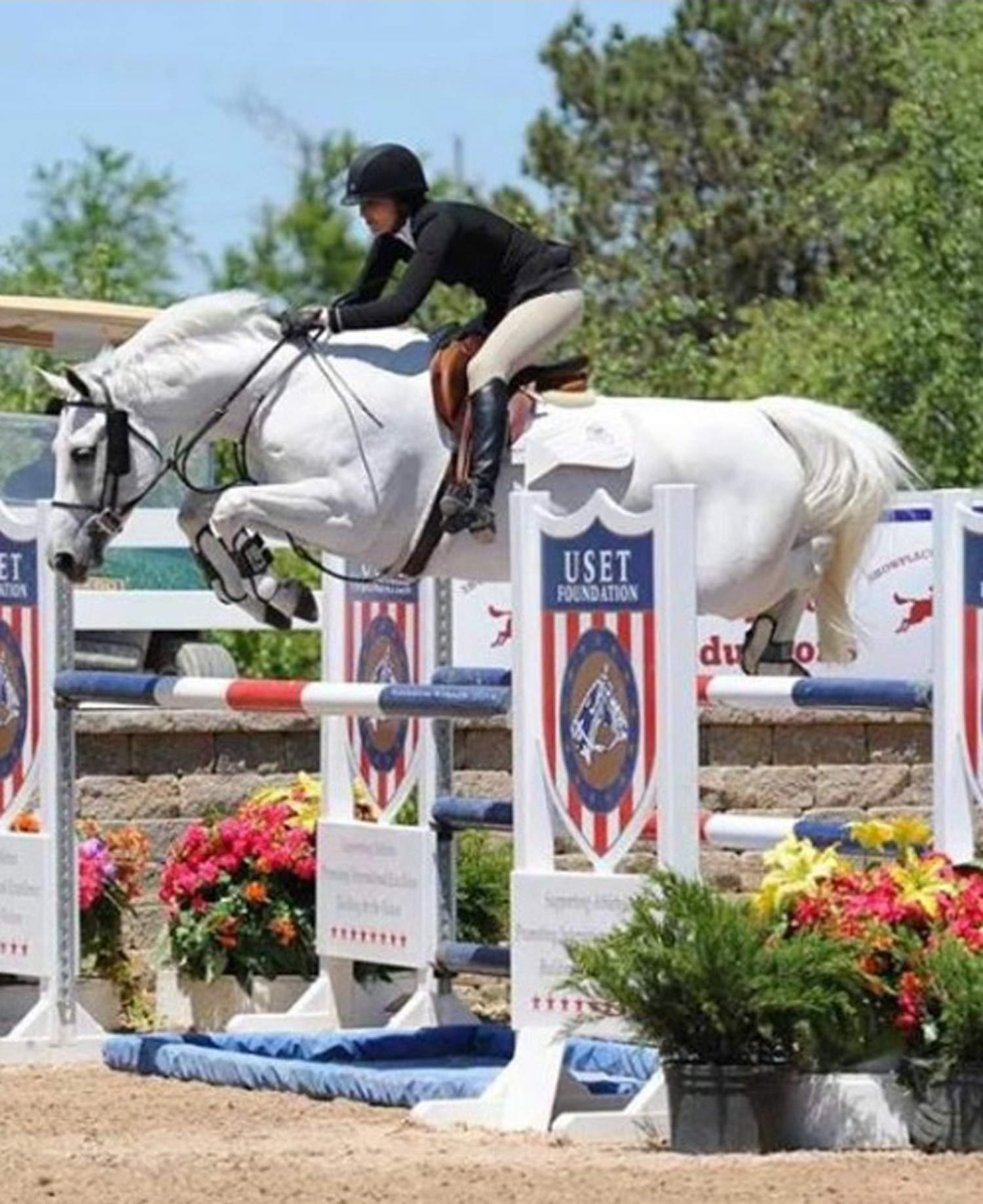 Warmblood Mare Competition