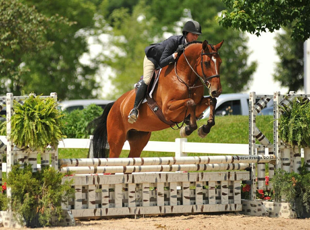 Warmblood Mare Jumping