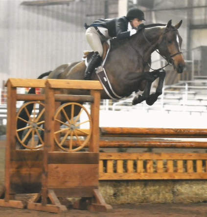 Hanoverian Gelding Flies