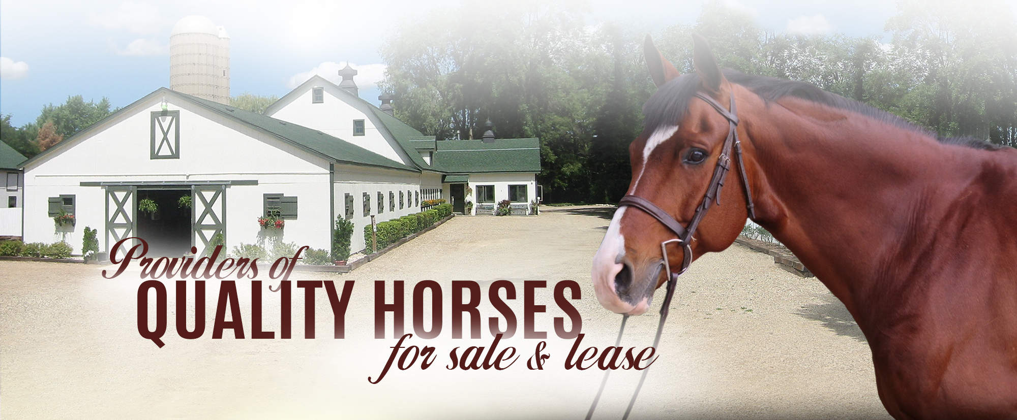 Galway Farm providers of quality horses for sale & lease