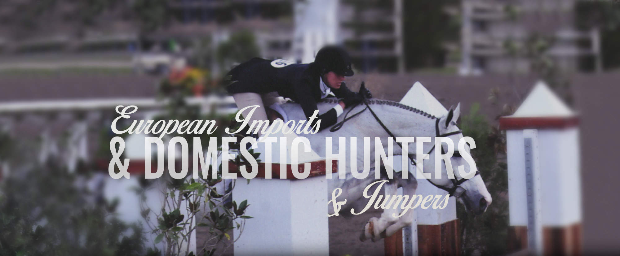 European Imports & Domestic Hunters & Jumpers Competition horses