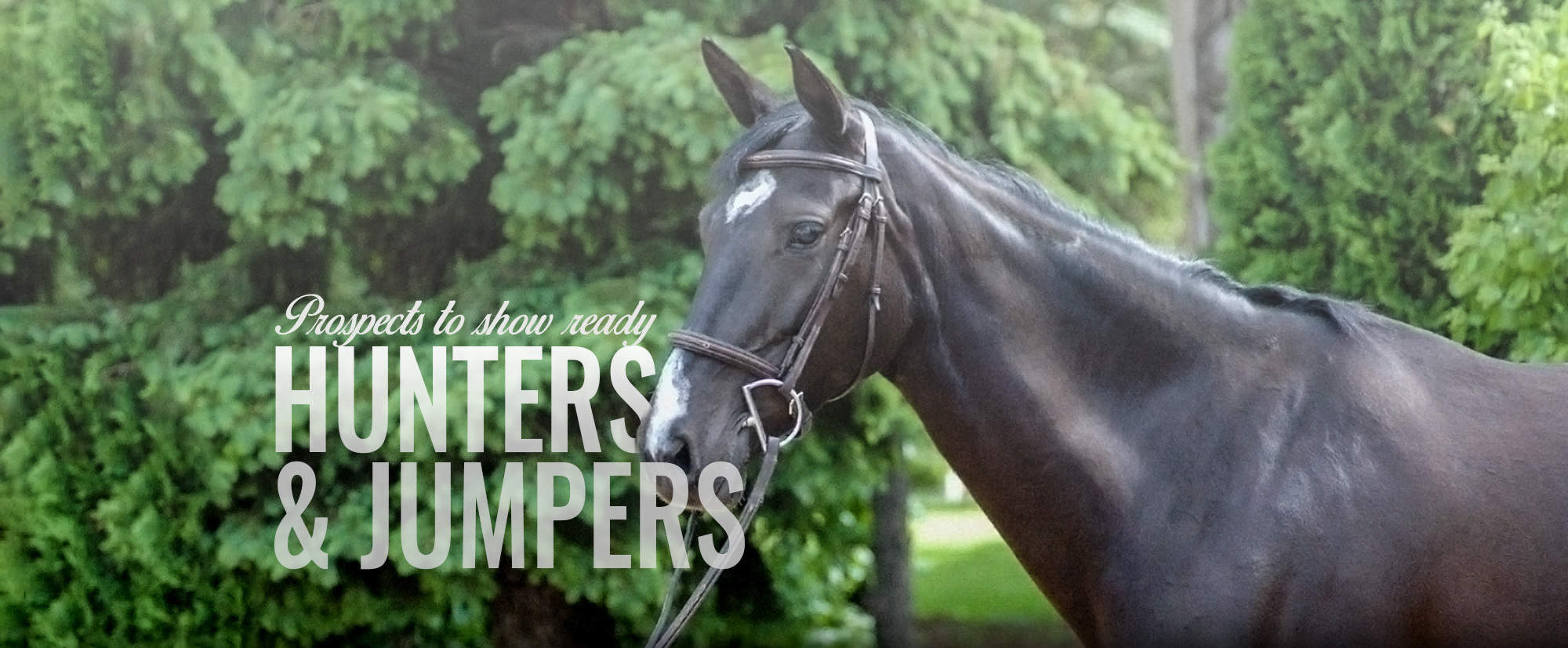 Prospects to show ready hunters & jumpers Galway Farm Long Grove, Illinois